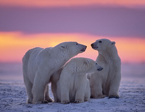 POLAR:<br>Save up to 20% on polar voyages