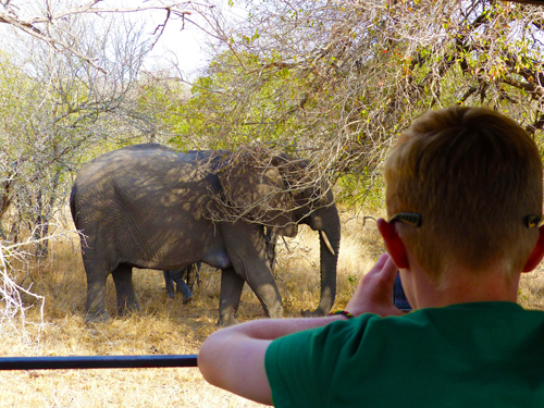 A young boy watching an elephant from a safari vehicle