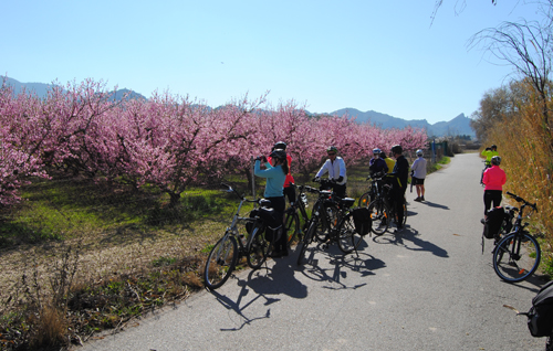 Cycling group paused to admire blossom in Murcia, Spain