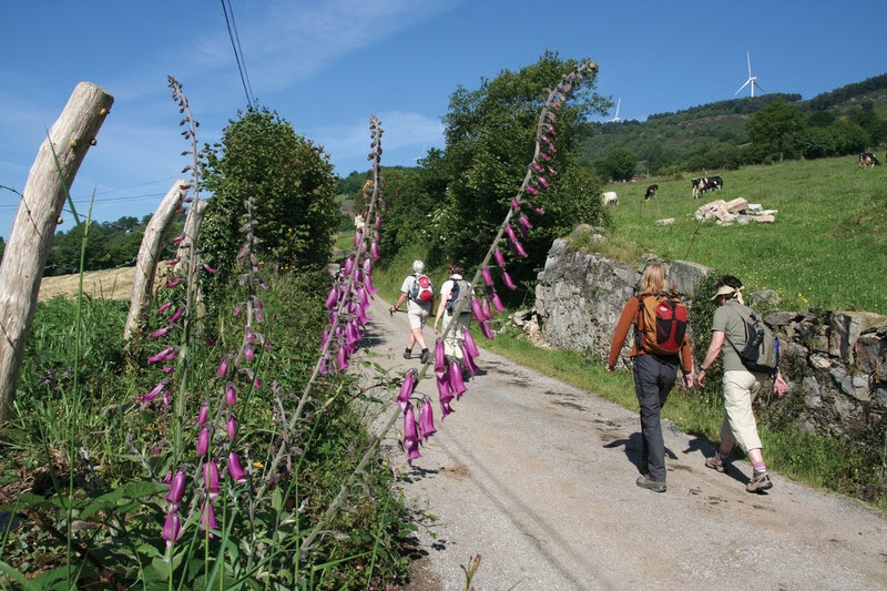 Walkers on the Camino