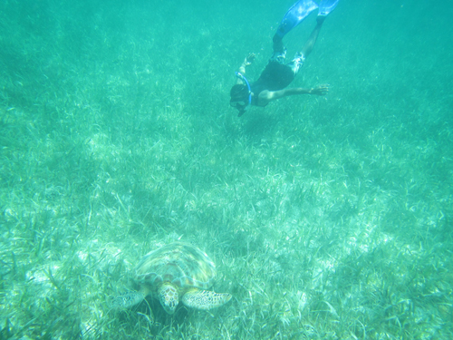 Teenager snorkelling with a turtle in Belize