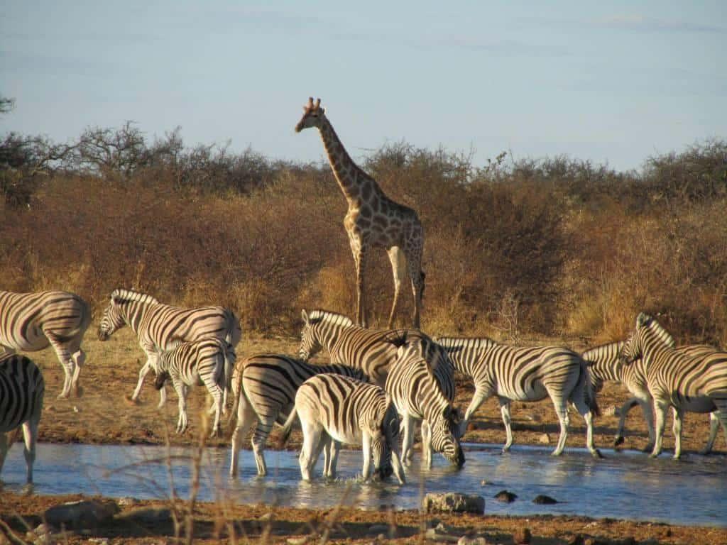 Wildlife at Etosha