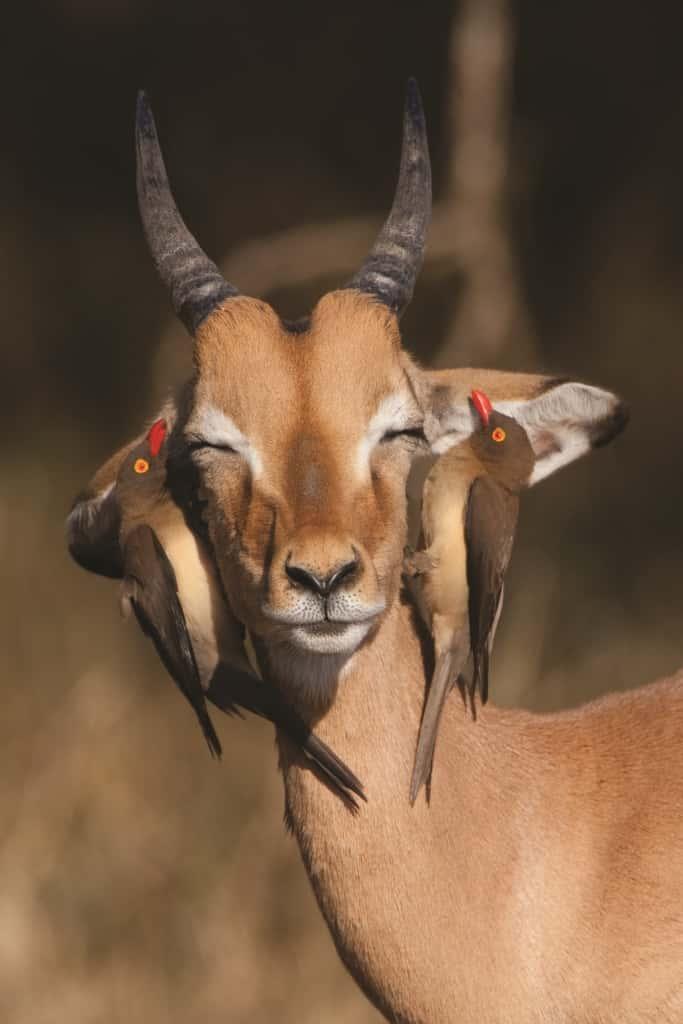 Kruger National Park Trips