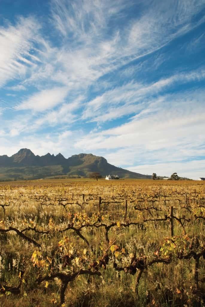 Stellenbosch Holidays & Tours