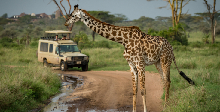 What to take on a safari holiday