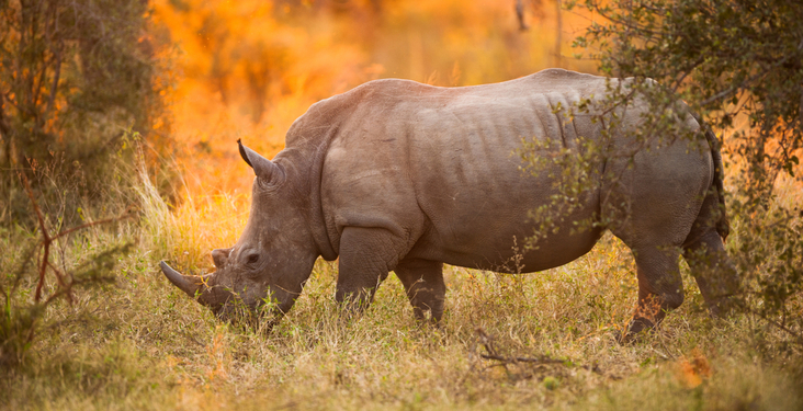 Best African safari destinations to spot the Big 5