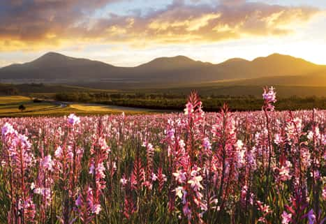 New Beyond trips The Cape Flowers South Africa