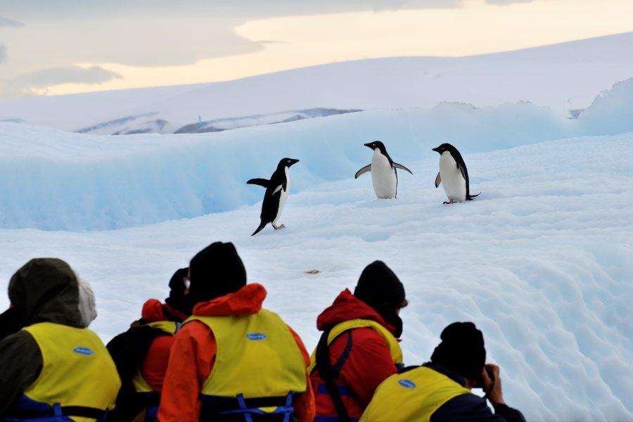 Adelie penguins from a Zodiac - Tony Gordon