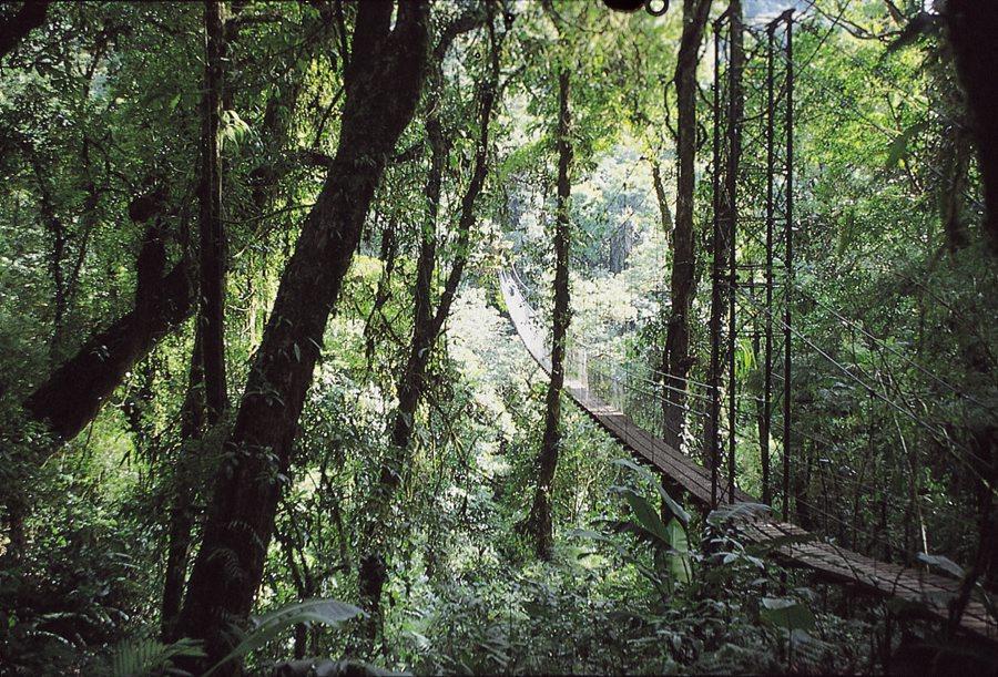 Canopy walkway in Monteverde