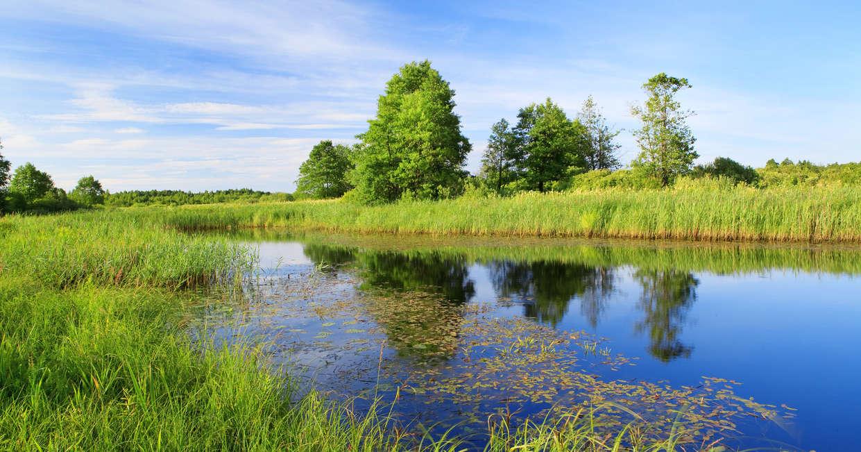 Berezinsky National Park