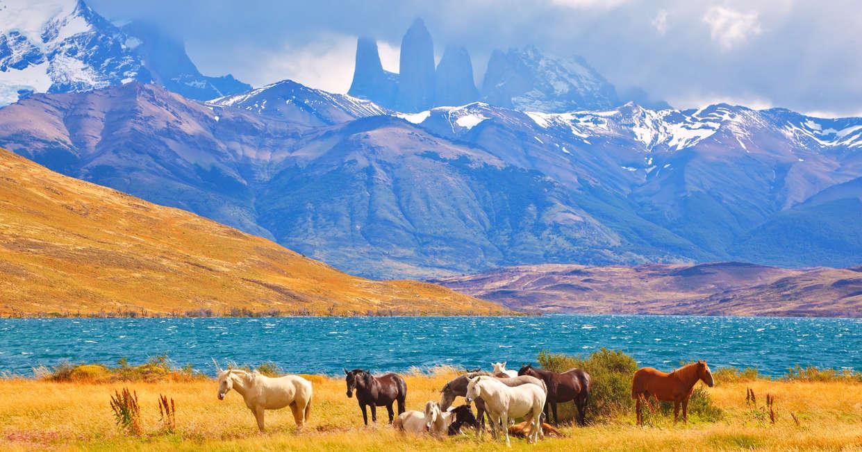Wild horses in front of the Torres Spires