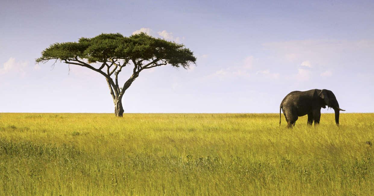 Serengeti Wildlife Experience