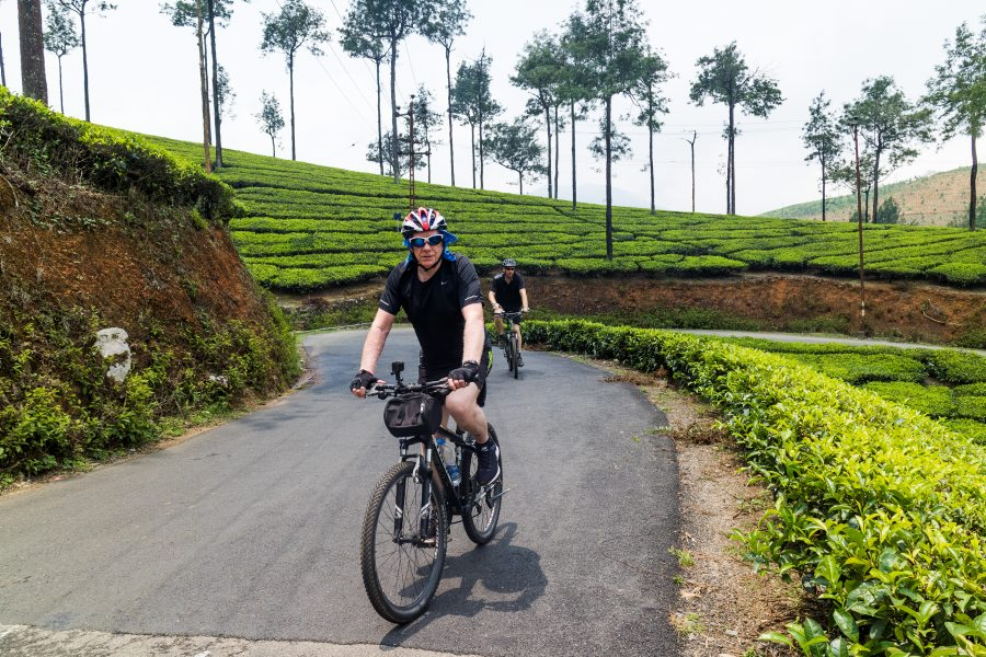 Cycling in the tea plantations