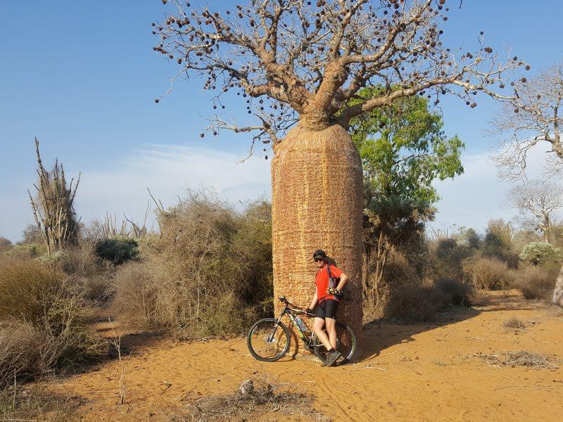 Baobab tree and bike near Tulear