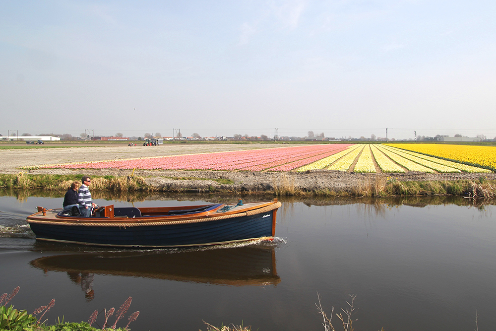 Canal and flower farm