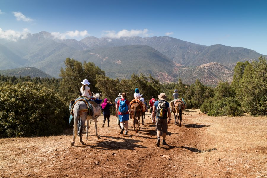 Mule trek in the Anti Atlas