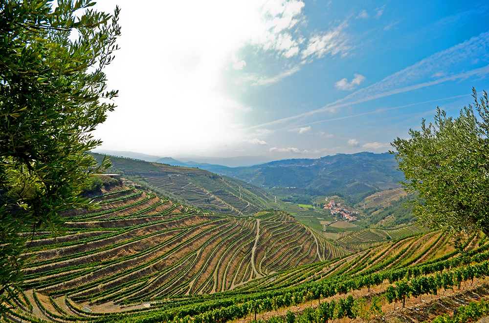 Vineyard, Douro Valley