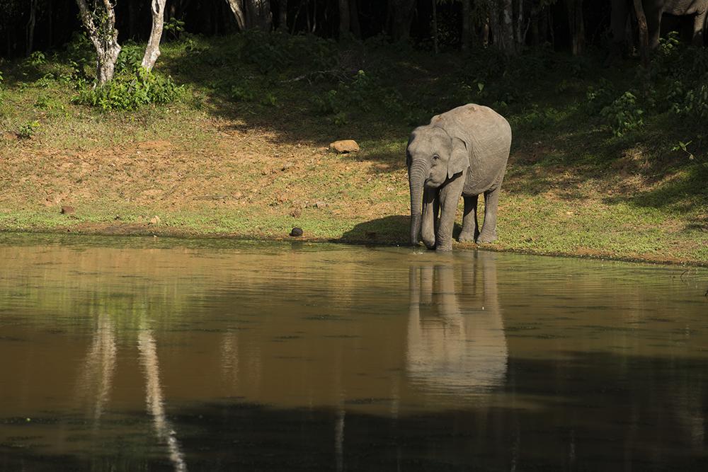 A baby elephant at Wilpattu National Park