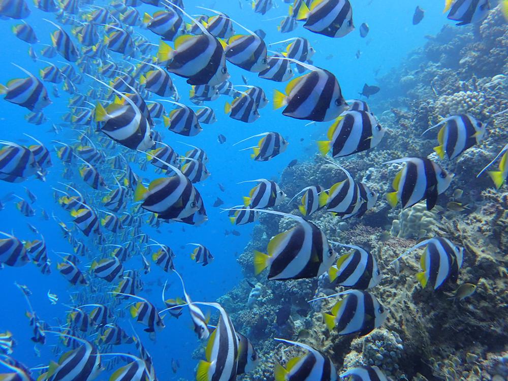Colourful underwater sea life in the Maldives