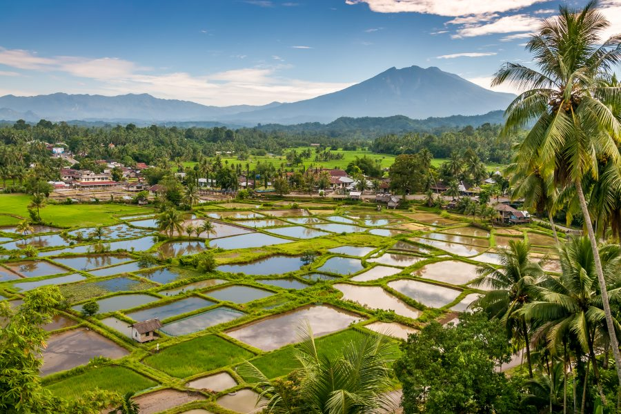 Rice fields of Sumatra